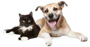 Pet Care Plans