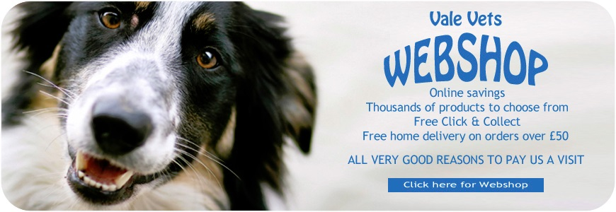 Vets in Streatham, Balham, Mitcham and Dulwich | Vale Vets