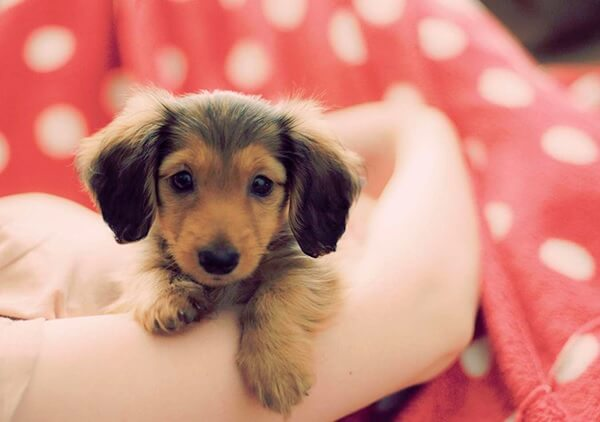 feeding-your-puppy-page-image