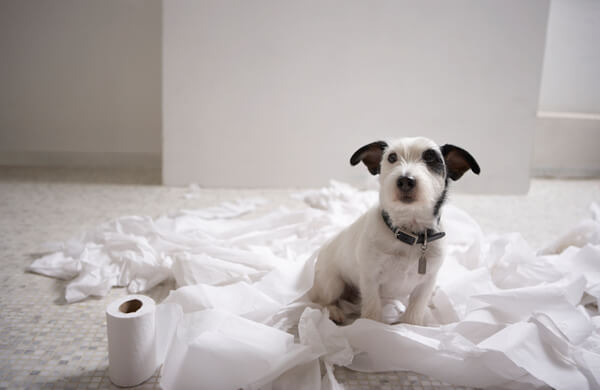 Puppy-Toilet-Training1
