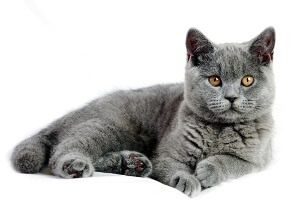 Shutterstock Cat Image Resized